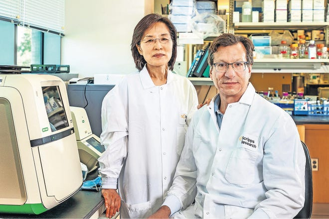 Hyeryun Choe, Ph.D., and Michael Farzan, Ph.D., met at Harvard University 20 years ago when they both studied how the SARS virus infected cells. A related virus causes COVID-19.