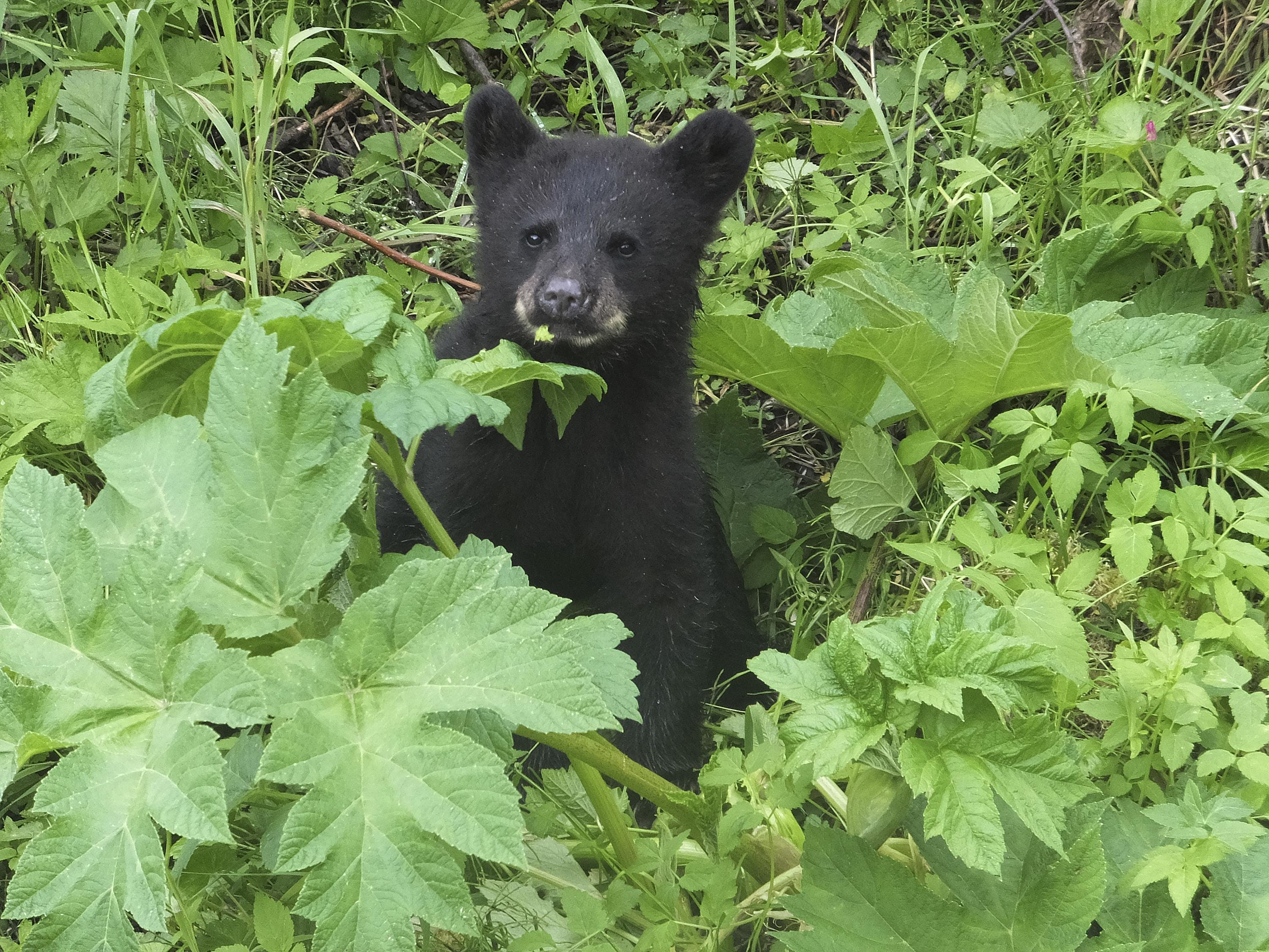 Alaska woman using outhouse attacked by bear, from below 2