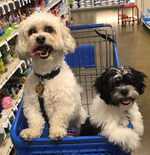 """Kirby and Daisy sit in a shopping cart during a trip to Petsmart in July, 2019. """"We had gone there around the Fourth of July to get fish supplies for a goldfish we had won at the town carnival,"""" Sarah Manos said."""