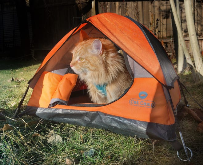 Happy camper: Leon the cat even has his own tent.