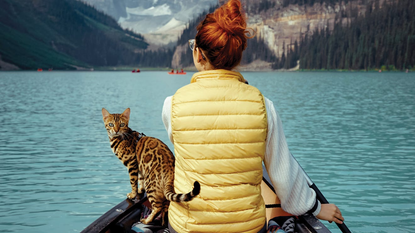 Cats That Cherish Adventure