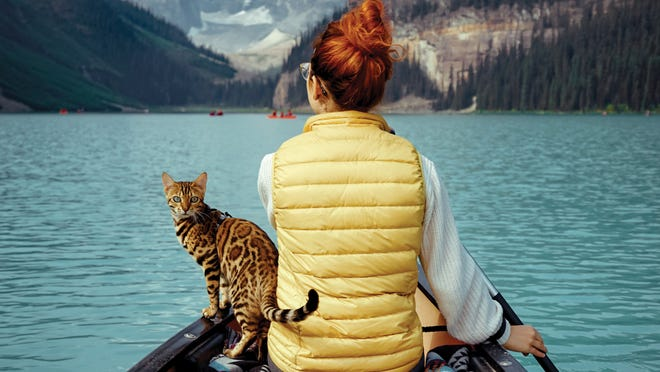 Suki, a 3-year-old Bengal cat, rides shotgun alongside owner Martina Gutfreund during a canoe trip around Canada's Lake Louise.