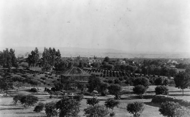 A panoramic view of Cahuenga Valley, just west of Los Angeles, is pictured in the time of Harvey Wilcox. The orchard in the foreground is located at what would later become the intersection of Prospect Avenue and Cahuenga Ave.