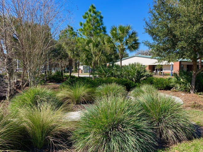 Use of native grasses and trees in swale areas at UF IFAS in Gainesville.