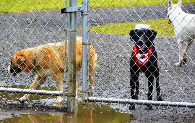 "A dog park in Milford would ""provide a safe space for dogs to learn how to socialize and play,"" according to organizer Brendan Rickert."