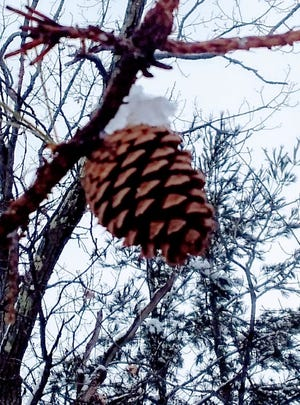 A lone pine cone stands out against a cloudy sky.