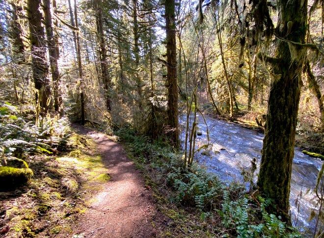 Shotgun Creek Recreation area between Salem and Eugene features some beautiful rainy season hiking options.