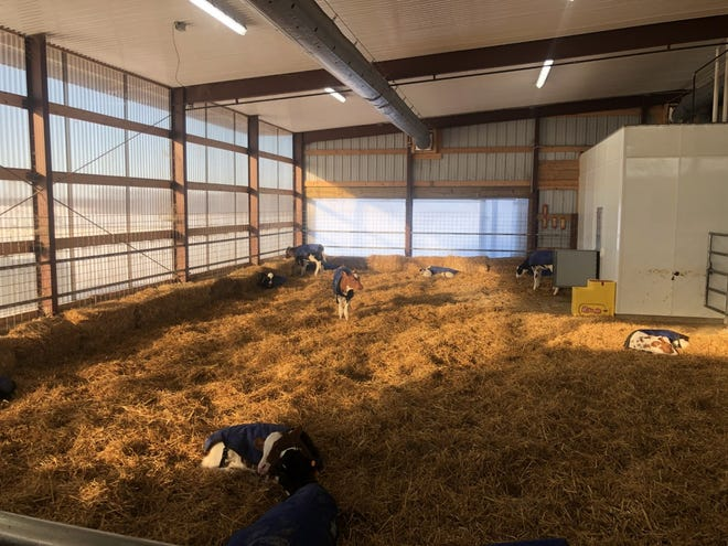 With the automated feeding system, milk goes from the cows to the calves without anyone ever handling it.