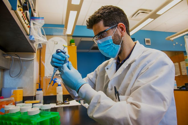 David Porciani, MU assistant research professor, works in the Burke Lab at the Bond Life Sciences Center.