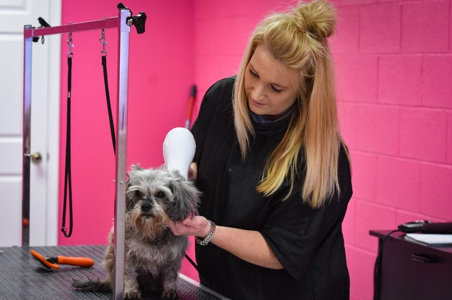 Shelly Garcia, owner of Nauti Dog Grooming, grooms one of her smaller clients. Nauti Dog Grooming, which opened Feb. 1, will offer day care for pets starting this summer.