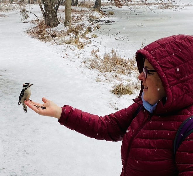 A downy woodpecker landed on the underside of Laurie Cooper's hand at first, and then made its way to her palm to get some seeds. Note the downy feathers and other details up close as the woodpecker perched on her fingertips.