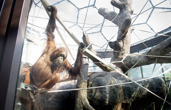 The RainForest at the Cleveland Metroparks Zoo is reopening to the public after a year of renovations.