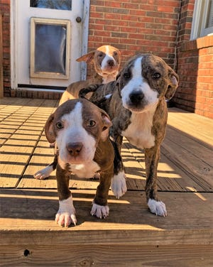 Joy, Noel and Holly benefitted greatly from their pet fostering experience.