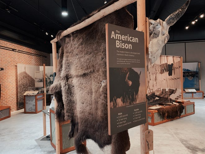 Bison, a traveling exhibit featuring a cultural and natural history of the American bison, will be on display at Boot Hill Museum in the Mariah Gallery through April 4.