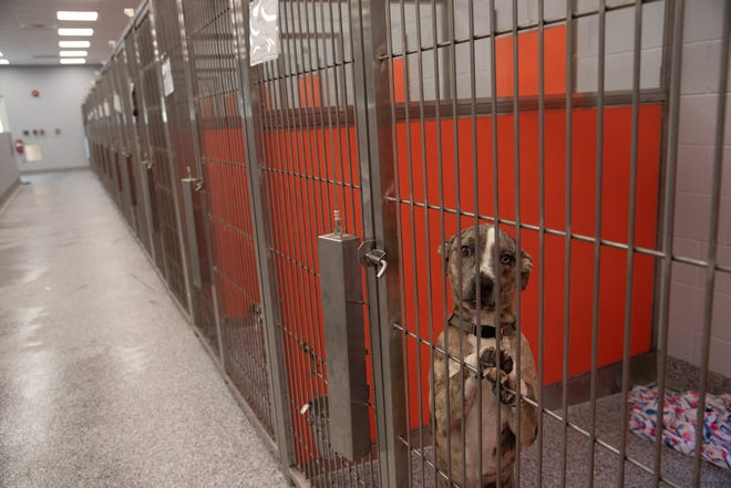 Kennels at the Bishop Animal Shelter in Bradenton. The shelter is being donated to Manatee County by the Mary E. Parker Foundation.