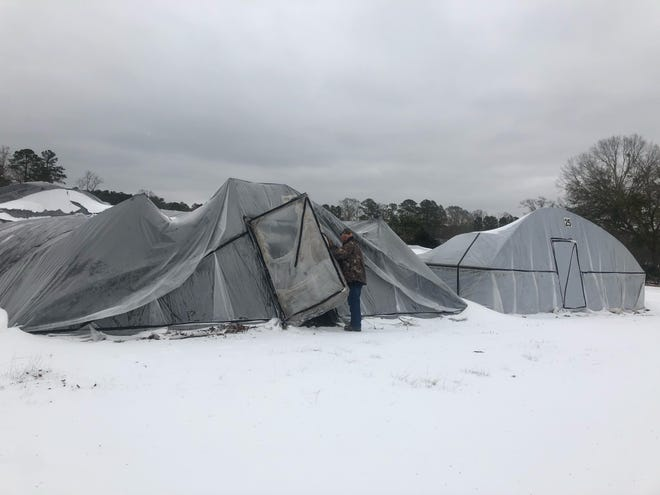 Mike Polakovish opens a door to one of Richard's Nursery's greenhouses after many collapsed in the wake of back-to-back winter storms across Central Louisiana. The Forest Hill nursery is one of many in the area that saw much of their inventory destroyed in the storms.