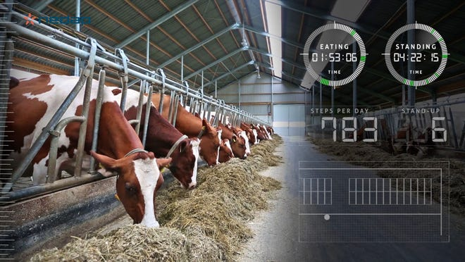 Herd monitoring technology detects early cow reactions to nutritional changes, allowing for management pivots before performance is lost.