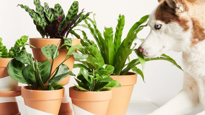 Live plants will make your home feel happier.