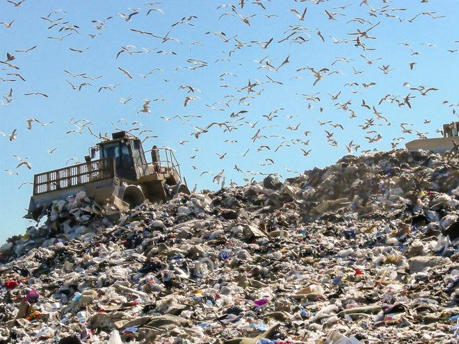Birds circle the Tomoka Landfill.