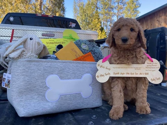 Charlee wears a sign announcing community members helped purchase her for Miles Isbell.
