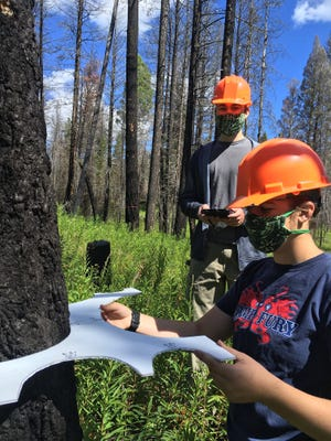 The Youth Forest Monitoring Program (YFMP) is an innovative summer citizen science program for students entering grades 9-12.