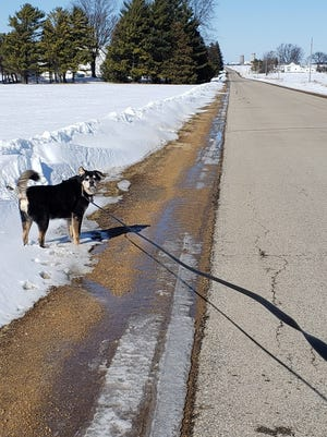 Sunny walking on road shoulder before the end of February melt.