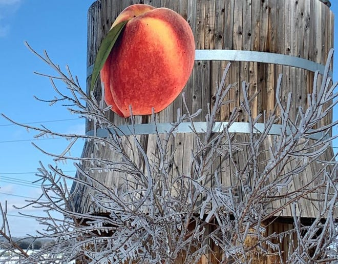 Like many Hill Country peach farms, Jenschke Orchards' crop wasn't as affected by the recent storm as other agricultural businesses in the area.