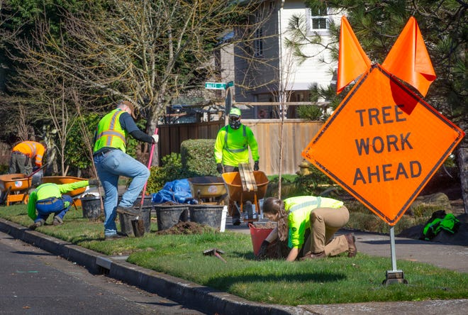 A crew from the city of Eugene plants new trees along Praslin Street in Eugene March 2, 2021. The Eugene Sustainability Commission is recommending the City Council establish a dedicated Climate Action Fund to support efforts in the Climate Action Proposal, such as planting more trees to increase citywide canopy cover.