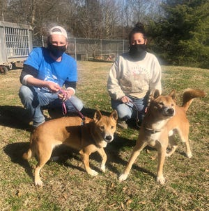 Handlers Kennie Dale, with Fritz, and Kristin Cain, with Mary Margaret, are shown at Tigers for Tomorrow. Fritz and Mary Margaret are New Guinea singing dogs.