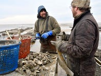 Matt Williams, owner of South Bay Shellfish Co., left, and Ned Gaine, owner of Bay Ridge Oyster LLC, pick market oysters from the Delaware Bay in Cape May County on Monday, Mar. 1, 2021.