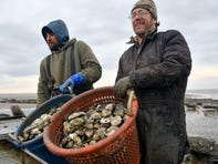 Ned Gaine, owner of Bay Ridge Oyster LLC, right, and Matt Williams, owner of South Bay Shellfish Co., work on filling a bushel of oysters picked from the Delaware Bay in Cape May County on Monday, Mar. 1, 2021.