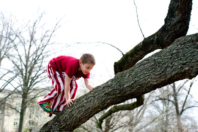 Nolan McKinney of Boonville, Ind., makes his way up one of the branches of the Linden tree on the front lawn of the University of Evansville Friday afternoon, March 18, 2016. He and his sister, 3, were visiting the campus with their mom, Lori McKinney, an alum of the university. The tree collapsed Sunday night leaving a pile of broken, rotted wood, but thousands of fond memories.