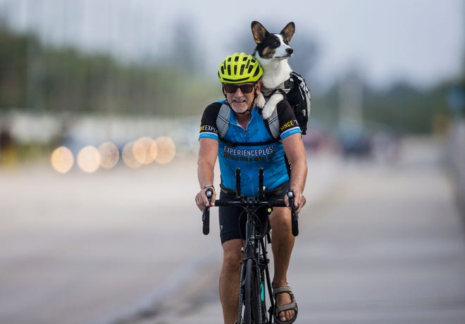 Winston the Corgi takes in the sights while getting a ride with his owner, Marty Vondra, on Tuesday morning in Fort Myers. Although recent temperatures in Southwest Florida have been above normal, this coming weekend may bring the last cool weather of the season.