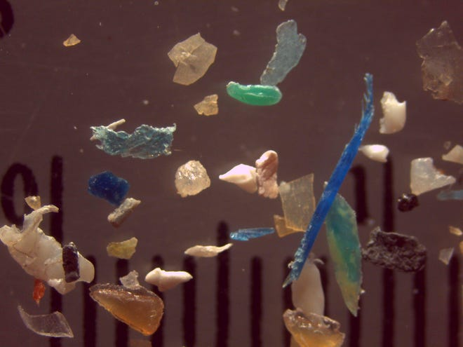 This is an undated contributed photo of microplastics (shown here with a one-inch ruler behind them), which are pieces of plastic smaller than 5 millimeters wide. They were found in water samples taken from Great Lakes tributaries, according to a recent study. A SUNY Fredonia professor involved in the study says microplastics are in lakes, rivers and creeks everywhere, including Erie County.