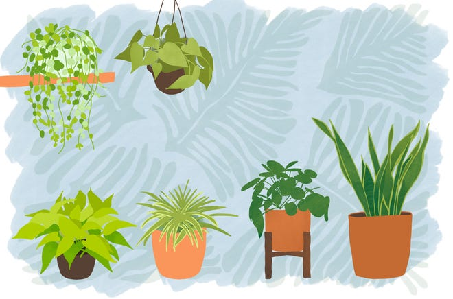 Smarty Plants