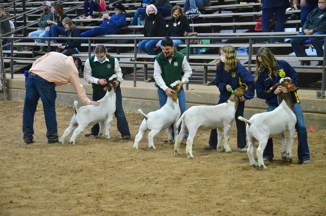 Pottawatomie County Junior Livestock Show, goat competition.