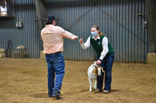 Action from Tuesday's goat show.