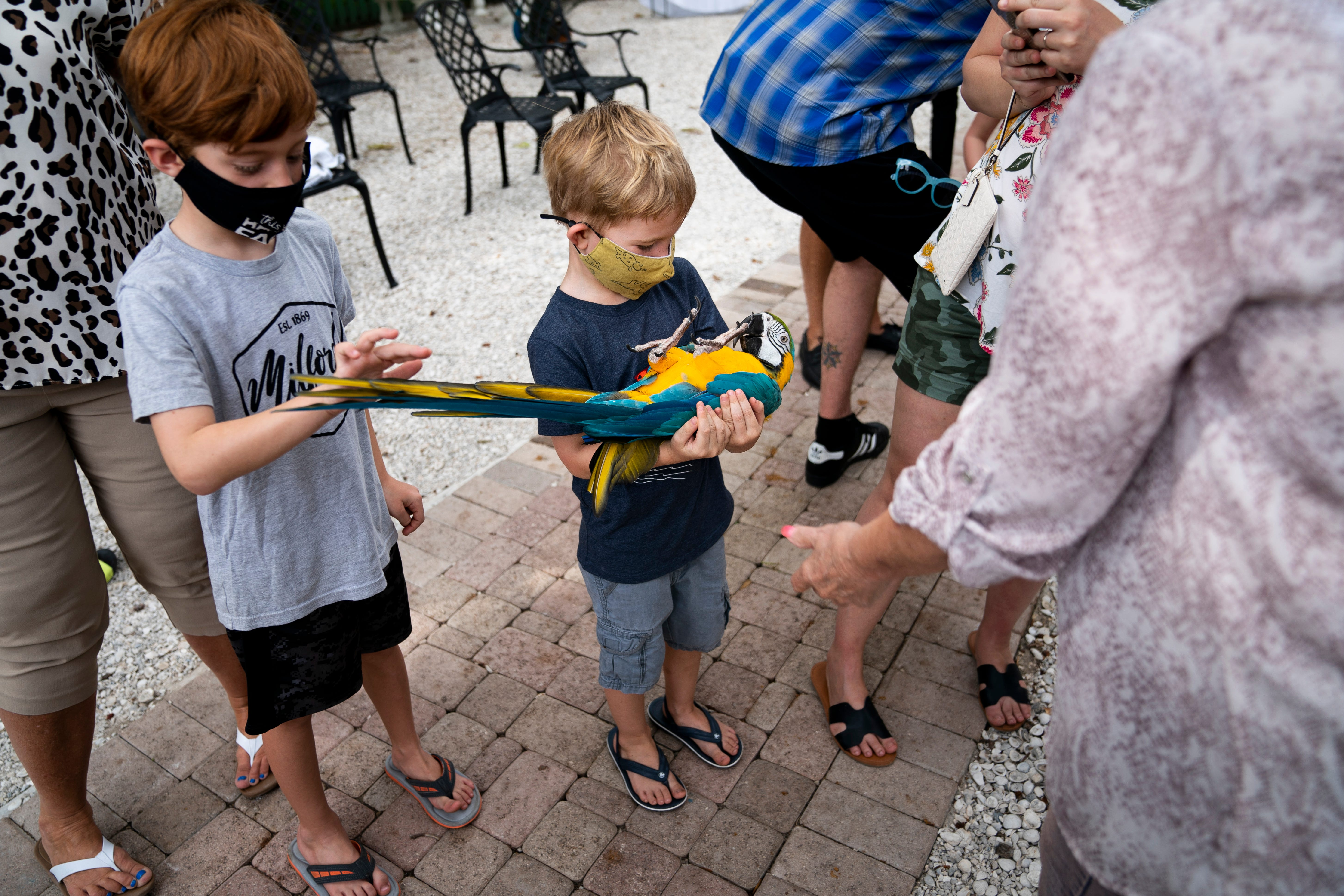 The Wonder Gardens hosts Parrots and Parasols event to celebrate birds, more 3