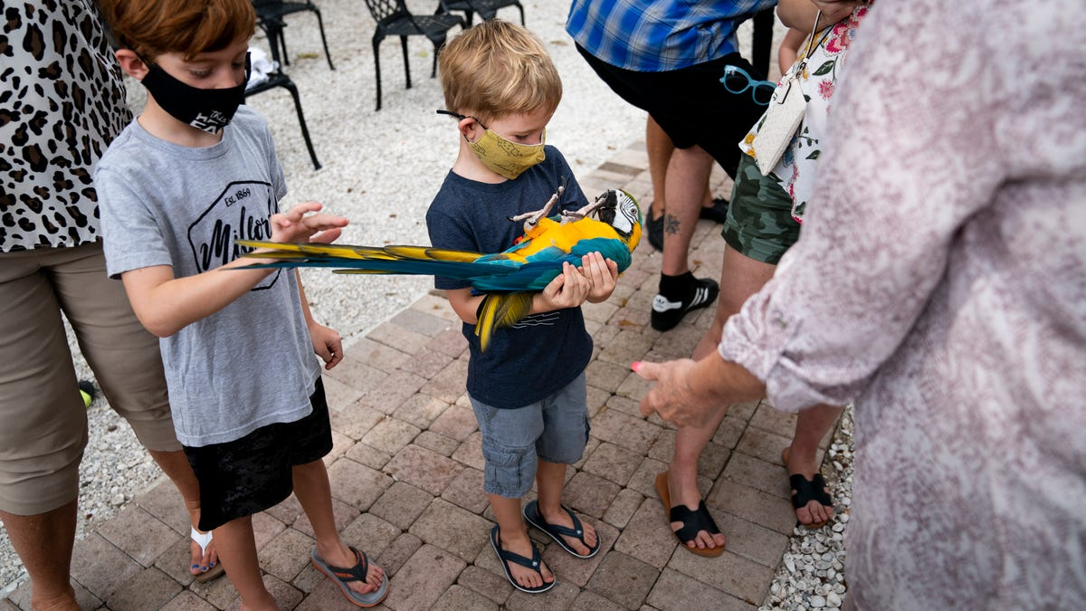 The Wonder Gardens hosts Parrots and Parasols event to celebrate birds, more 2