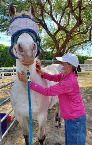 Barbara, a Forever Free Horse Rescue volunteer, grooms Silver.
