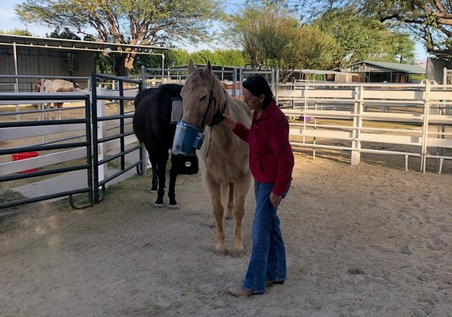 Yvonne Wall, founder of Forever Free Horse Rescue, gives Duke his nebulizer treatment.