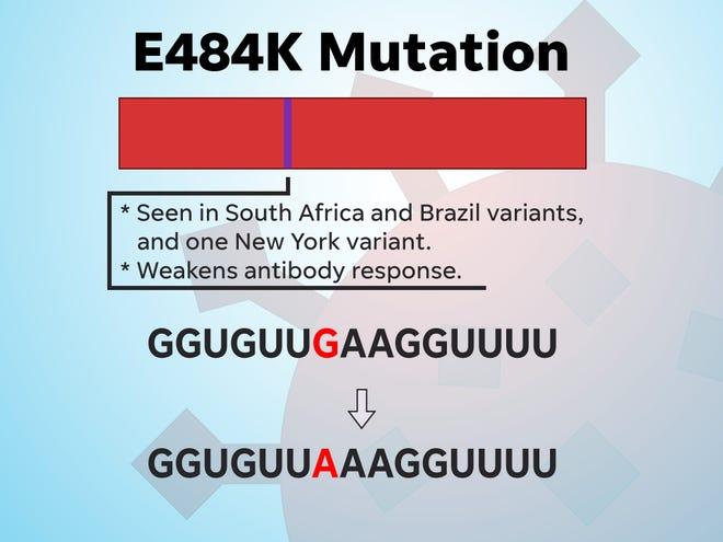 The E484K mutation has been shown to weaken antibody responses.