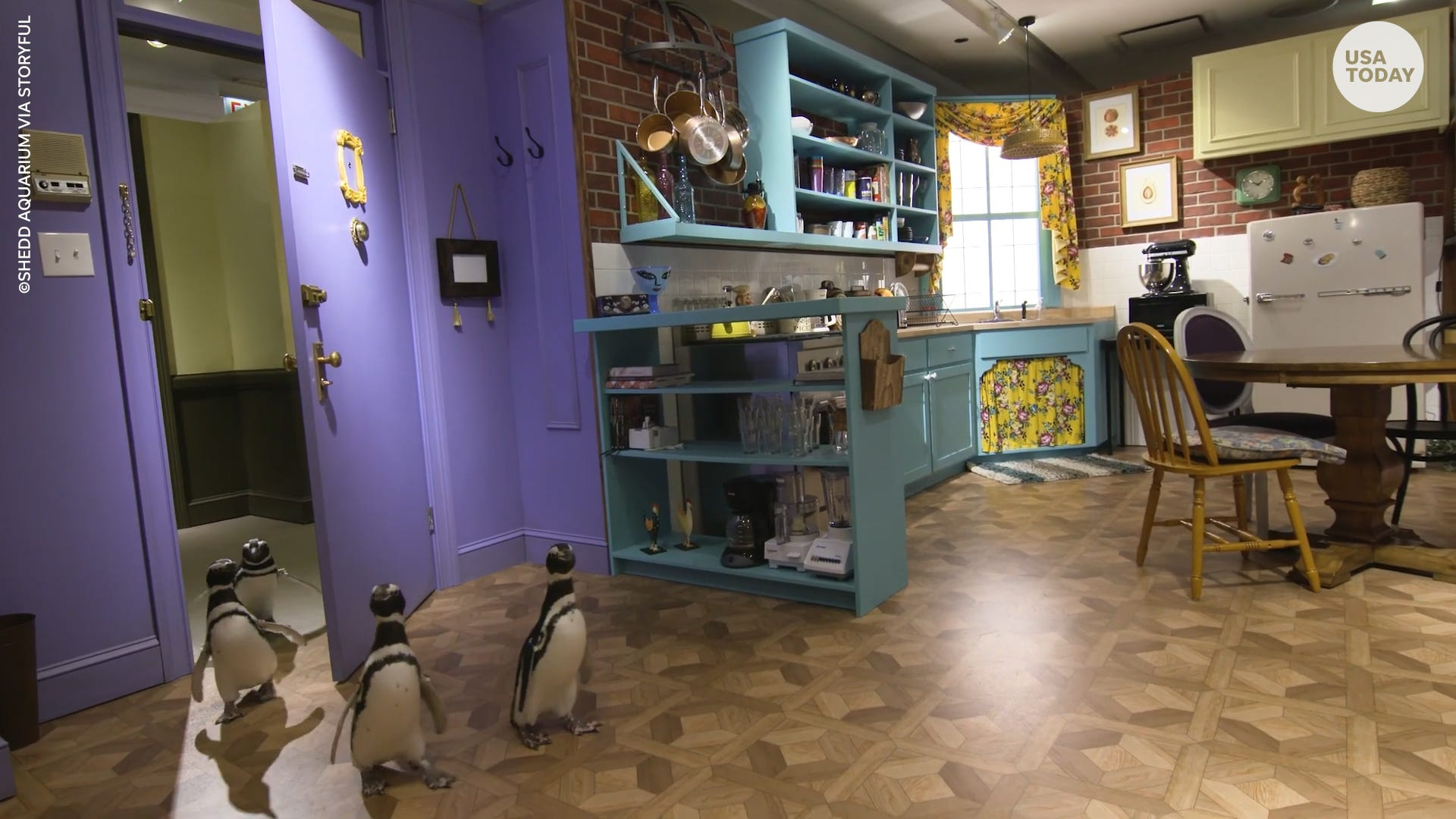 Watch these penguins waddle through the most iconic sets from 'Friends'