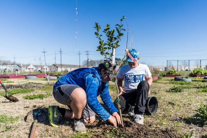 Joseph and James Leger of Houma plant a thornless key lime tree at the St. Francis Vegetable Garden in Thibodaux.