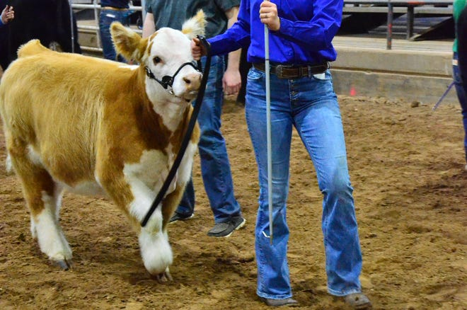 Competition at the Pottawatomie County Junior Livestock Show Wednesday, March 3.
