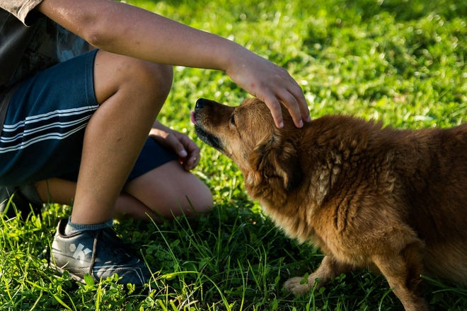 Franklin is considering opening its first dog park. However, before that can happen, the site has to be confirmed as safe as it was a former disposal site that had been contaminated.