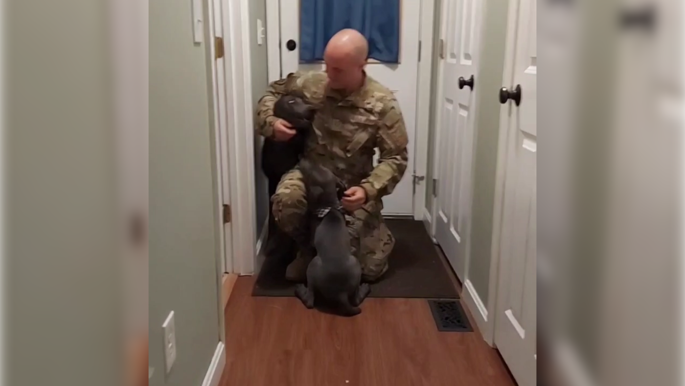 Dog and puppy welcome home their soldier