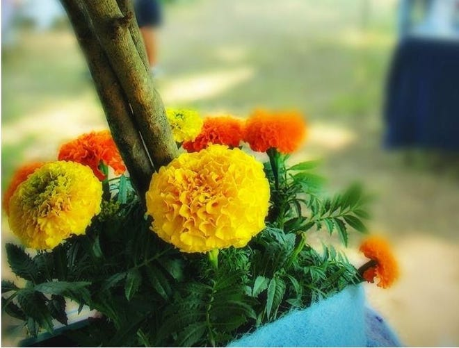 The Winterville Marigold Festival, to be held virtually this year, is set for May 8.