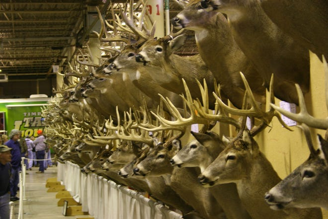 Deer heads typically are displayed at outdoors expositions currently scheduled for late July in Columbus after being postponed from March.