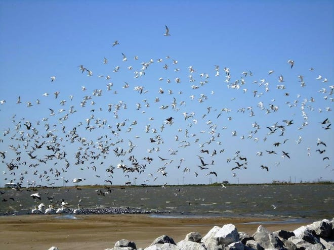 Elmer's Island Wildlife Refuge will remain closed until further notice because of damages sustained from Hurricane Ida.